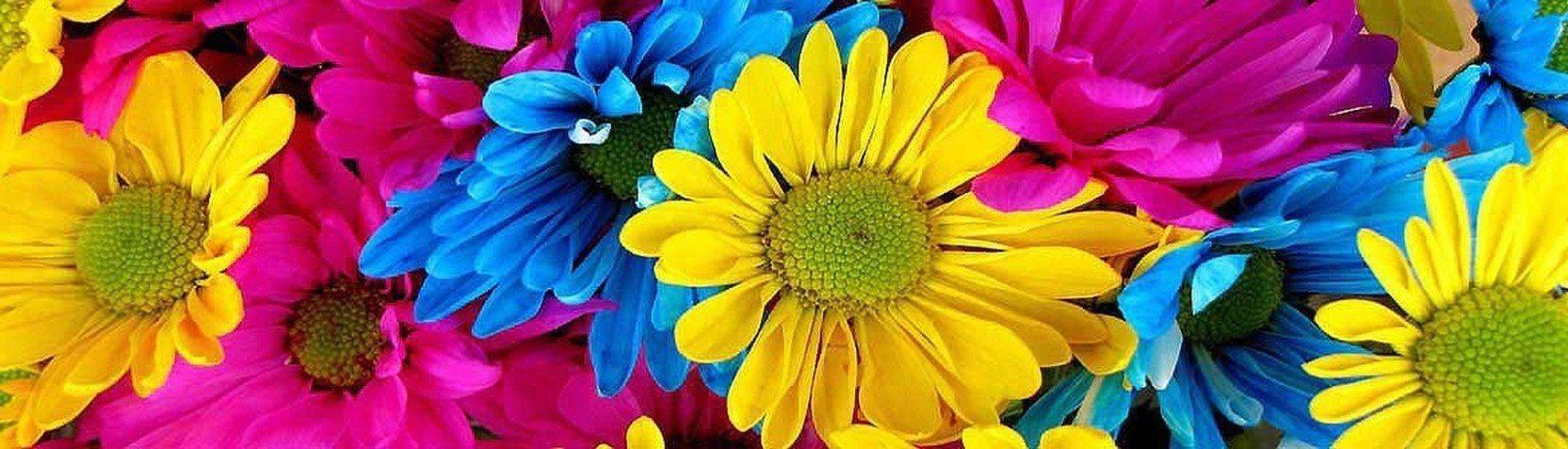 Kolekcje - Obrazy Kwiaty