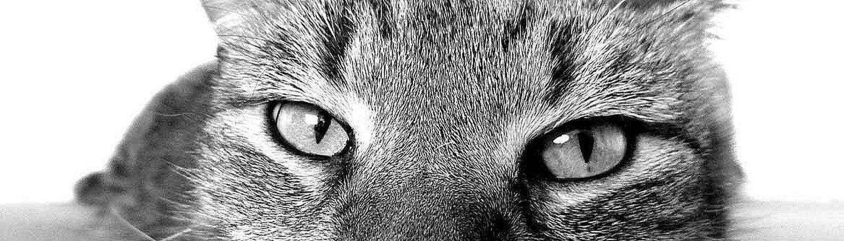 Fotografia - Fotografia zwierząt